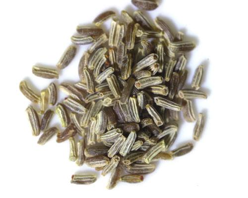 カモミールの種まき方法