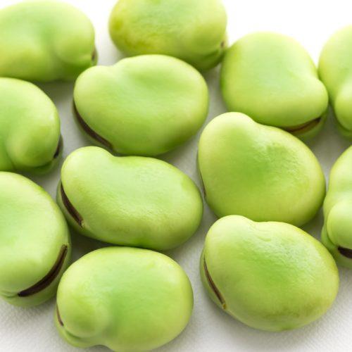 ソラマメ(空豆)の種まき方法