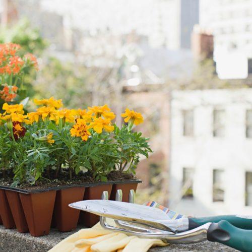 【花が咲かない?】野菜やハーブや花の開花時期や日数は?