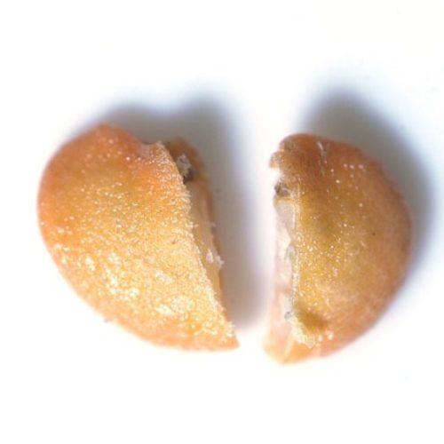ナス(茄子)の種まき方法