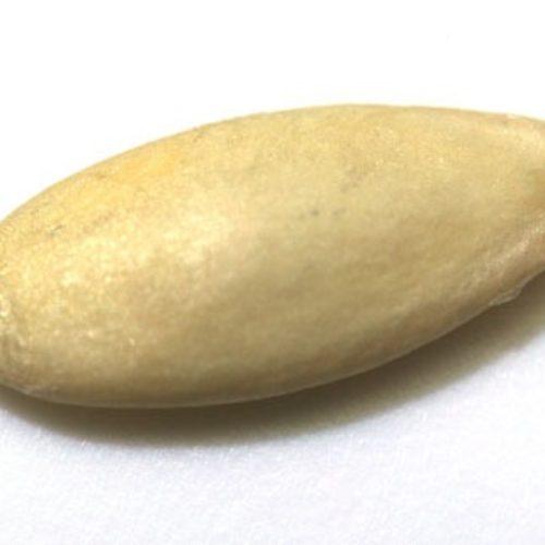 キュウリ(胡瓜)の種まき方法