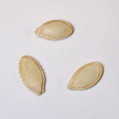 丸ズッキーニ・ドンダ・ディ・ビア・チェンザの種まき方法