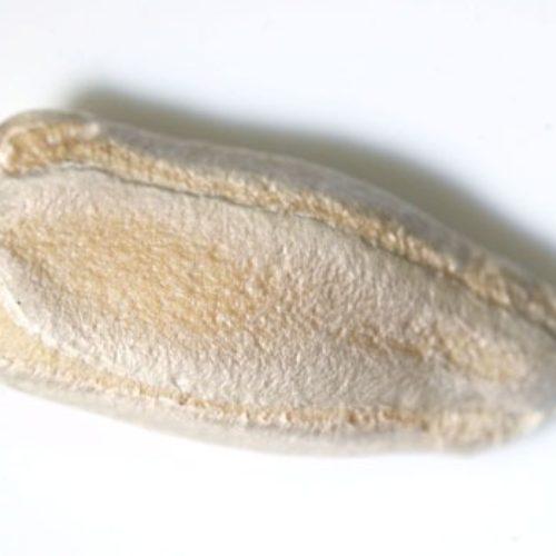 ヒョウタン(瓢箪)の種まき方法