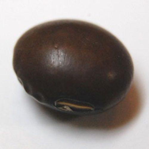 チャマメ(茶豆)の種まき方法