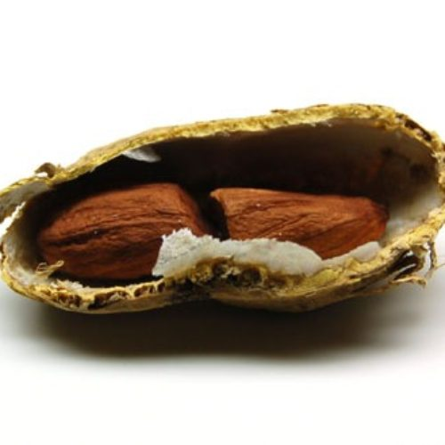ラッカセイ(落花生、ピーナッツ)の種まき方法