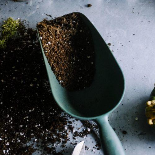 【植え替えにおすすめの配合は赤玉土や鹿沼土じゃない??】バラの鉢植えの用土って何がいいの?